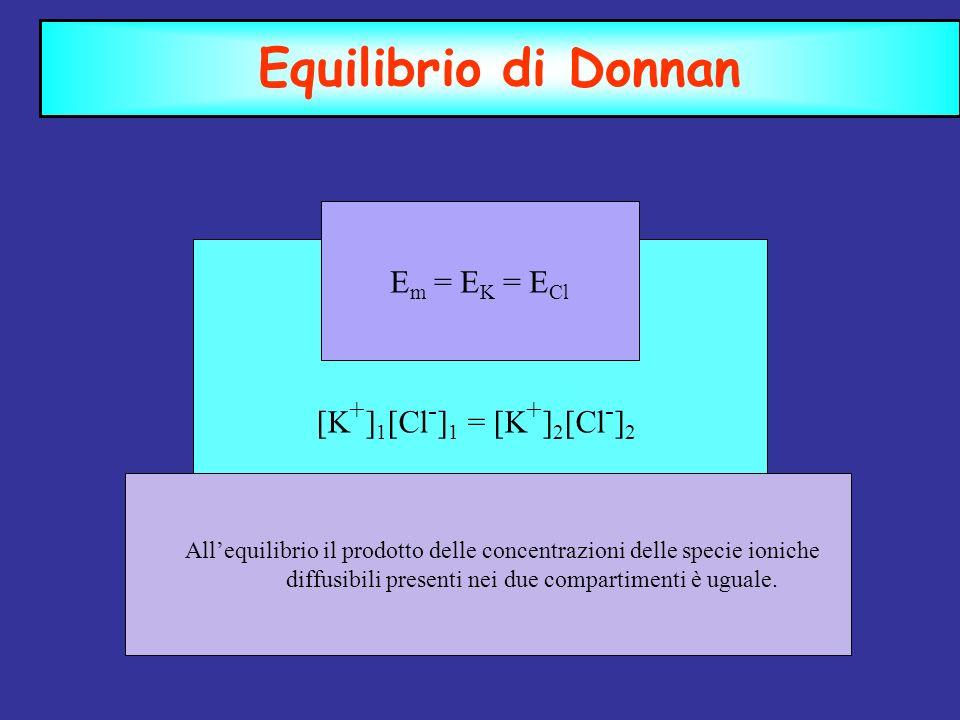Equilibrio di Donnan Em = EK = ECl [K+]1[Cl-]1 = [K+]2[Cl-]2